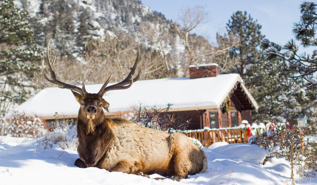 elk at mcgregor